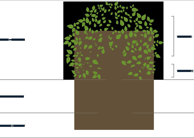 course-tree